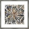 Dandelion Framed Print