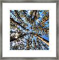 Dandenong Forest Framed Print by Colin Woods