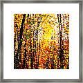 Dappled Sunlight Framed Print