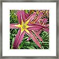 Dark Star Daylilies Framed Print
