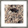 Darkling Beetle And Moqui Marbles Framed Print