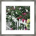 David Austin Roses Chelsea Flower Show Framed Print