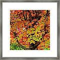 Day Glo Autumn Framed Print