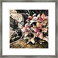 Decayed Pink Framed Print
