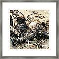Decomposing Dead Bird Framed Print