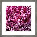 Decorative Fancy Pink Kale Framed Print