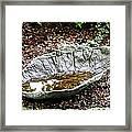 Decorative Leaf Birdbath Framed Print