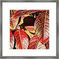 Deep Into Autumn Framed Print