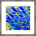 Deep Sea Fish And Diver Framed Print