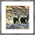 Deer Alert Framed Print by Rebecca Adams