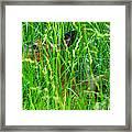 Deer In Tall Grass Framed Print