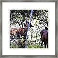 Deer Looking For Food Framed Print