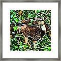 Deer's Green Day Framed Print