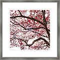 Delightful Fall Framed Print