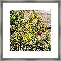 Delphi Pomegranate Framed Print