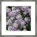 Descanso Gardens 8 Framed Print