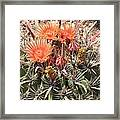 Desert Beauty Framed Print
