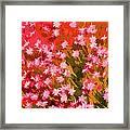 Desert Broom Abstract  Framed Print