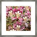 Desert Calico Wildflowers Framed Print