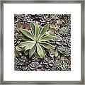 Desert Flora Framed Print