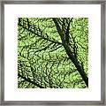 Design In Nature Framed Print