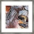 Detritis Framed Print