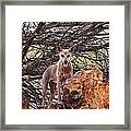Dingo In The Wild V5 Framed Print