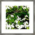 Dogwood In The Wind Framed Print