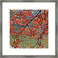 Dogwood Tree Framed Print