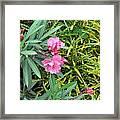 Double Oleander Framed Print