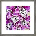 Dragon Lilly Framed Print