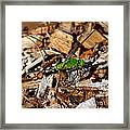Dragonfly In Mulch Framed Print