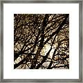 Dreaming of Night Framed Print