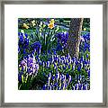 Dreaming Of Spring Framed Print by Carol Groenen