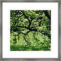 Dreaming Under The Old Oak Framed Print
