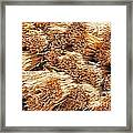 Dried Grass Framed Print