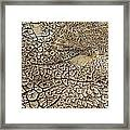 Dried Mud Pan It Time Of Drought Framed Print