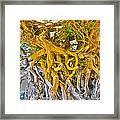 Queen Mariana's Driftwood Framed Print