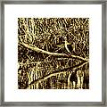 drying cormorant BW- Black bird sitting on log over water Framed Print