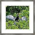 Drying Out Framed Print