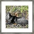 Drying Wings Framed Print