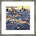 Duck Parade On The Beach Framed Print