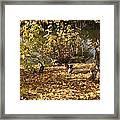 Ducklings In Sunshine Framed Print