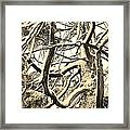 Snow Dusted Limbs Framed Print