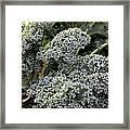 Dwarf Kale Framed Print
