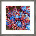 E Coli And Macrophages Sem Framed Print