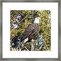 Eagle 1979 Framed Print