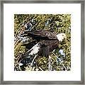 Eagle 1982 Framed Print