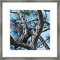 Eagle Flight Prep Framed Print