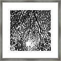 Early Autumn Monochrome Framed Print